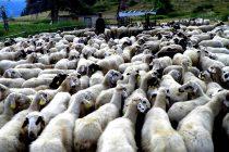 31 εκ. ευρώ για την ενίσχυση της ελληνικής αιγοπροβατοτροφίας