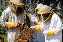 Με 5 δικαιολογητικά μελισσοκομικό βιβλιάριο σε Νέους
