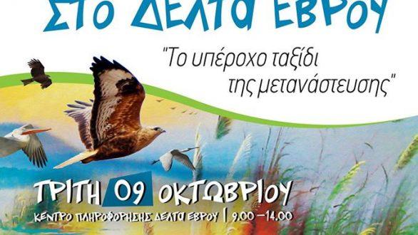 «Ευρωπαϊκή Γιορτή των Πουλιών 2018» στο Δέλτα του Έβρου!