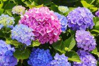 7 πανέμορφα λουλούδια που αντέχουν χειμώνα καλοκαίρι!