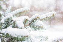 Ο καιρός τα Χριστούγεννα: Επιδείνωση του καιρού με χιόνια και στα ημιορεινά