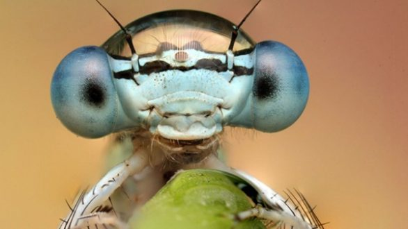 Έρευνα: Τα έντομα μειώνονται ραγδαία σε ολόκληρο τον κόσμο