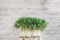 Πόσο οφελούν την υγεία τα ελληνικά αρωματικά φυτά