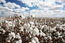 Δελτίο γεωργικών προειδοποιήσεων για ολοκληρωμένη φυτοπροστασία στην βαμβακοκαλλιέργεια