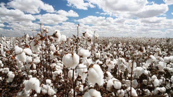 """Σ. Κελέτσης: """"Θέμα ημερών να πιστωθούν τα χρήματα των αποζημιώσεων στους αγρότες του Έβρου"""""""