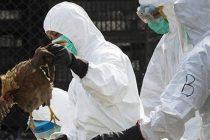 Βουλγαρία: Εστία γρίπης των πτηνών εντόπισαν οι Αρχές