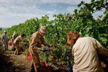 Νέα τμήματα αμπελουργίας και αγγλικών στο ΚΔΒΜ Αλεξανδρούπολης
