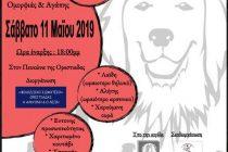 Ορεστιάδα: 3ος Διαγωνισμός ομορφιάς και αγάπης για τα ζώα