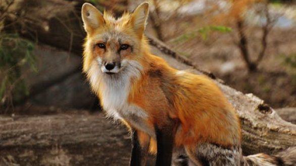 ΑΜΘ: Ξεκινάει η φθινοπωρινή εμβολιαστική περίοδος κατά της λύσσας