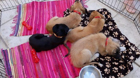 Ημέρα υιοθεσίας σκύλου πραγματοποιήθηκε χθες στην Αλεξανδρούπολη