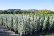 Διάθεση δασικών φυτών από τα δασικά φυτώρια της Αν. Μακεδονίας και Θράκης