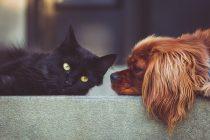 Εκδήλωση για τα οφέλη των ζώων συντροφιάς στην ψυχολογία του ανθρώπου