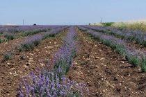 Ορεστιάδα: Ημερίδα για τα Αρωματικά Φυτά στην Σχολή Επιστημών Γεωπονίας και Δασολογίας
