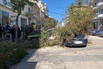 Πτώση δέντρου σε κεντρικό δρόμο της Ορεστιάδας – Χτύπησε σταθμευμένα και διερχόμενα οχήματα