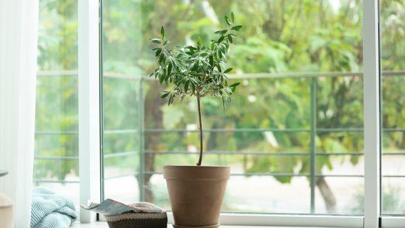 Πώς να φέρετε την φύση μέσα στο σπίτι σας