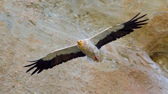 Μελέτη σε 9 χώρες για το πουλί με τα 21 ονόματα στην Ελλάδα