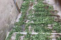 Σαμοθράκη: Φυτεία με 415 δενδρύλλια κάνναβης εντόπισε το λιμενικό
