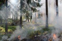 Αντιπυρική περίοδος στον Έβρο: Οι παρεμβάσεις πολιτών καθοριστικές για τις πυρκαγιές