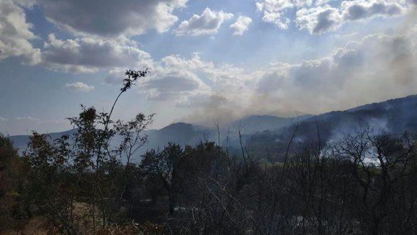 Πέτροβιτς: Πιθανό η πυρκαγιά στην Αισύμη να προκλήθηκε από δόλο