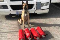 """Τελωνείο Κήπων: 8 κιλά κάνναβη μέσα σε πυροσβεστήρες """"ξετρύπωσε"""" ο αστυνομικός σκύλος Laika"""