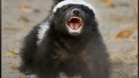 Αυτό είναι το πιο επικίνδυνο ζώο στον κόσμο