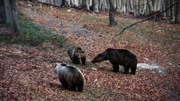 Έξι ορφανά άγρια ζώα στο Κέντρο Επανένταξης του Αρκτούρου