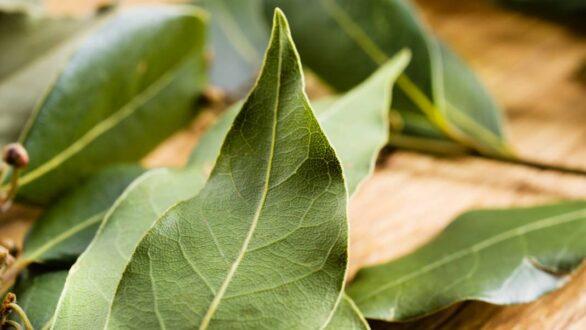 Το κόλπο με τα φύλλα δάφνης στα συρτάρια της κουζίνας που λύνει ένα μεγάλο πρόβλημα